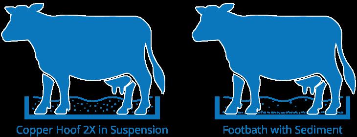 Copper Hoof 2X in Suspension