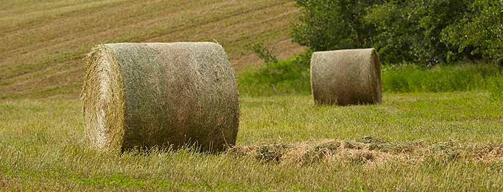 AGCO Buffered Acid - Small Square & Round Bales