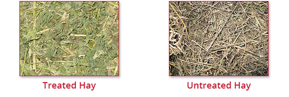 AGCO Treated & Untreated Hay