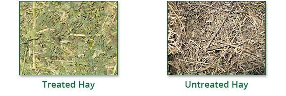 Baler's Choice - Treated Untreated Hay
