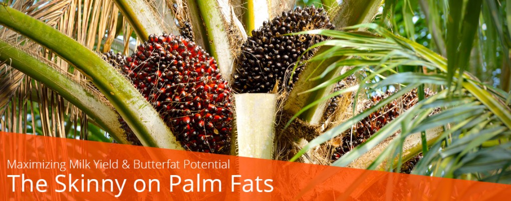 The Skinny on Palm Fats