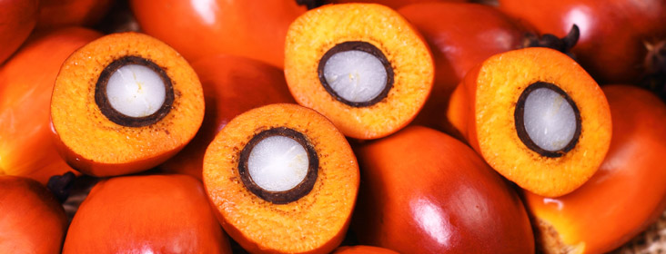 Palm Oil Fruit - Close Up