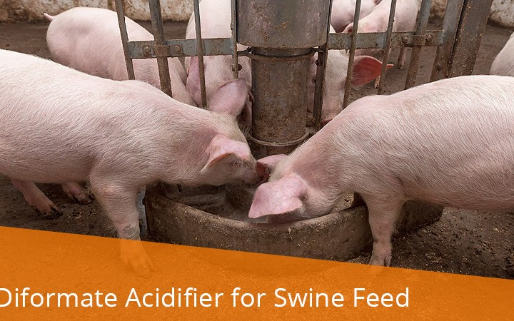 Sweet Iron – Oral Iron Supplement for Nursing & Weaned Pigs