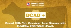 blog-dcad-plus-boost-milk-fat-combat-heat-stress-title