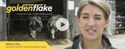 [Video] Golden Flake – Palm Fat Supplement